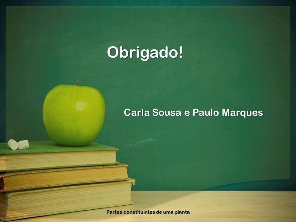 Obrigado! Carla Sousa e Paulo Marques