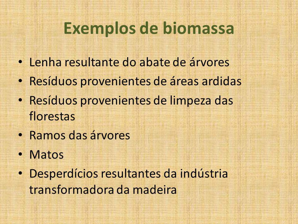 Exemplos de biomassa Lenha resultante do abate de árvores