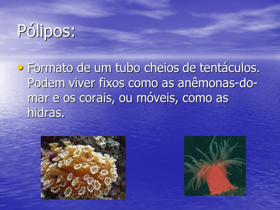 Pólipos: Formato de um tubo cheios de tentáculos.