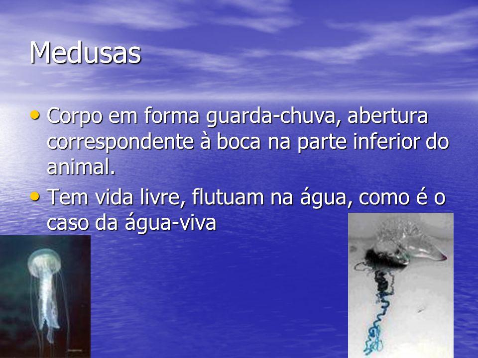 Medusas Corpo em forma guarda-chuva, abertura correspondente à boca na parte inferior do animal.
