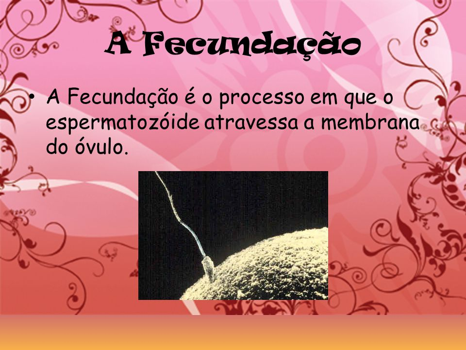 A Fecundação A Fecundação é o processo em que o espermatozóide atravessa a membrana do óvulo.