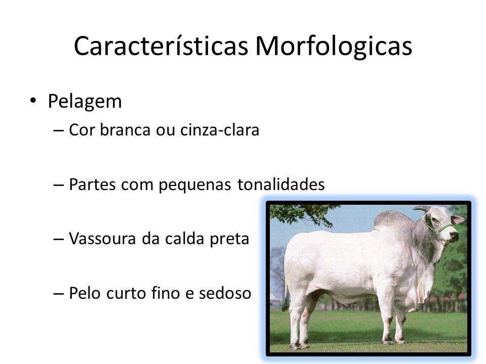 Características Morfologicas