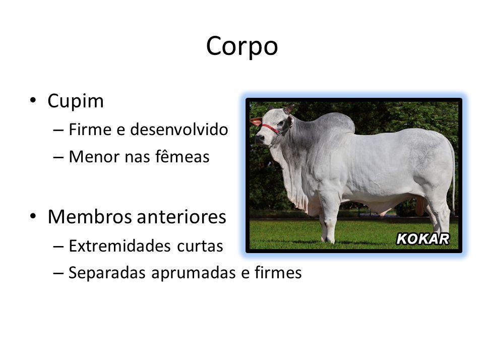 Corpo Cupim Membros anteriores Firme e desenvolvido Menor nas fêmeas