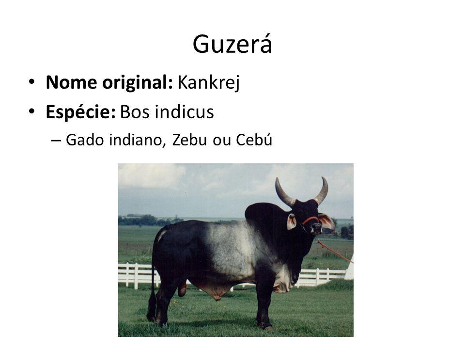 Guzerá Nome original: Kankrej Espécie: Bos indicus