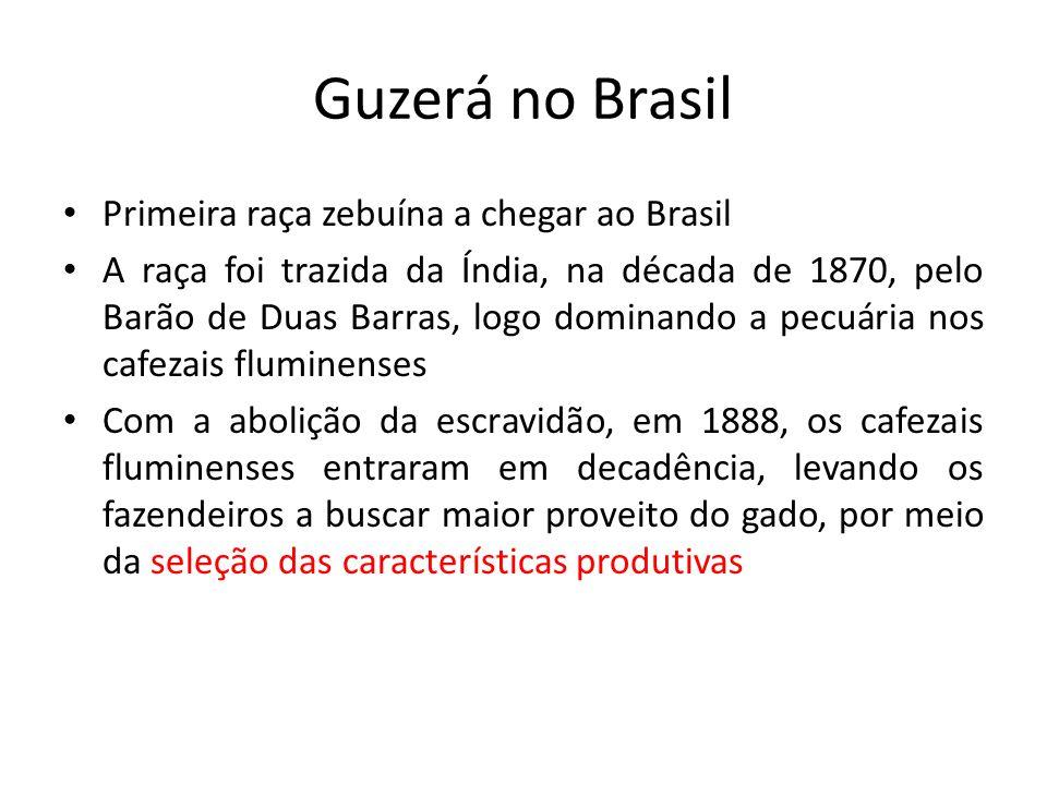 Guzerá no Brasil Primeira raça zebuína a chegar ao Brasil