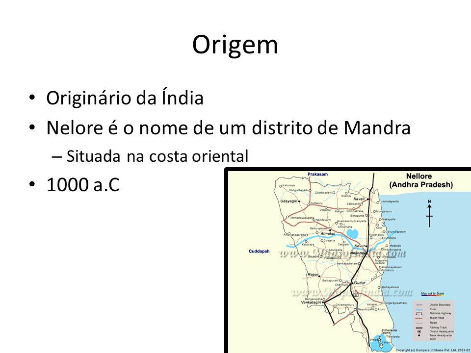 Origem Originário da Índia Nelore é o nome de um distrito de Mandra