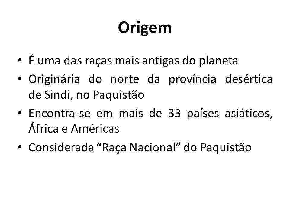 Origem É uma das raças mais antigas do planeta