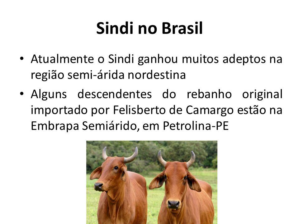 Sindi no Brasil Atualmente o Sindi ganhou muitos adeptos na região semi-árida nordestina.