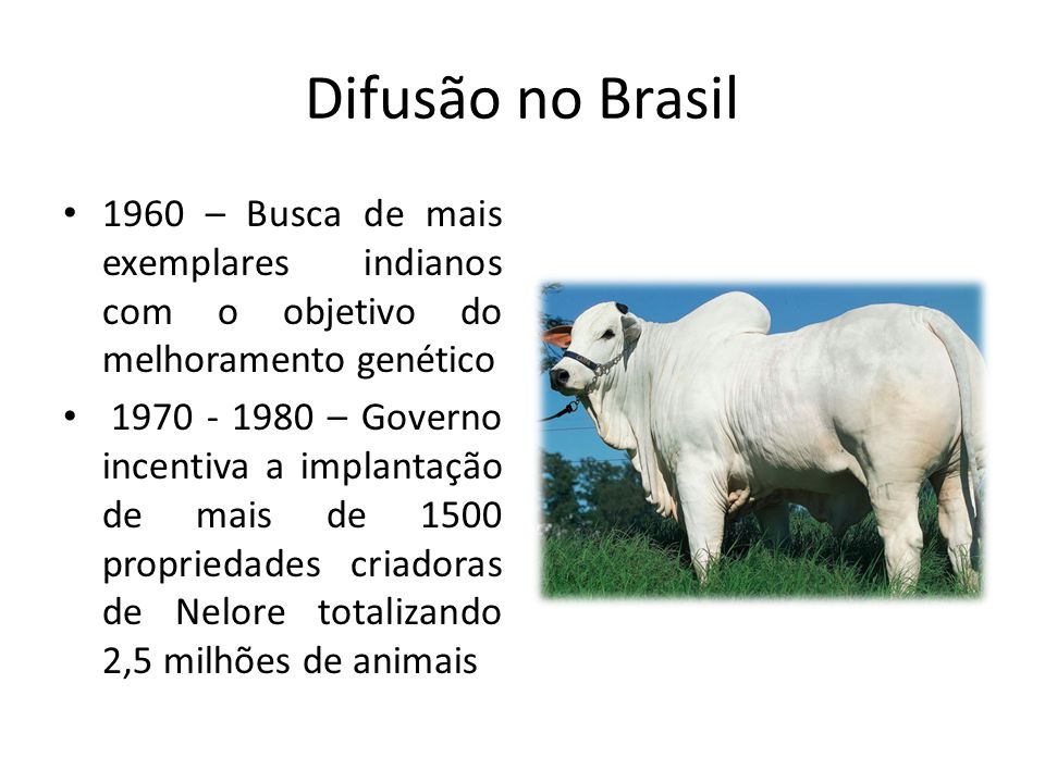 Difusão no Brasil 1960 – Busca de mais exemplares indianos com o objetivo do melhoramento genético.