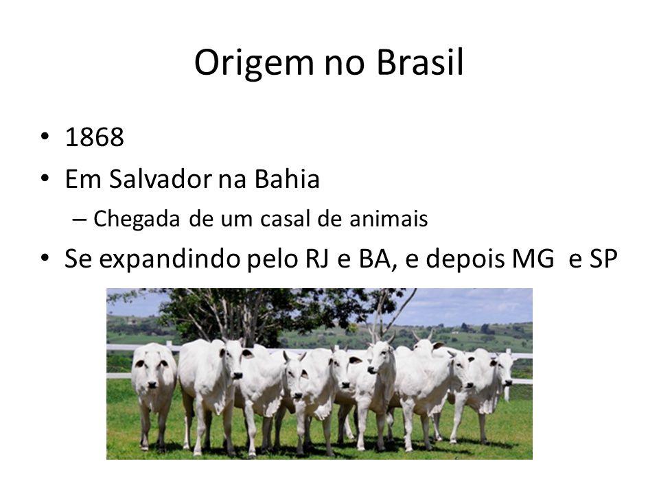 Origem no Brasil 1868 Em Salvador na Bahia