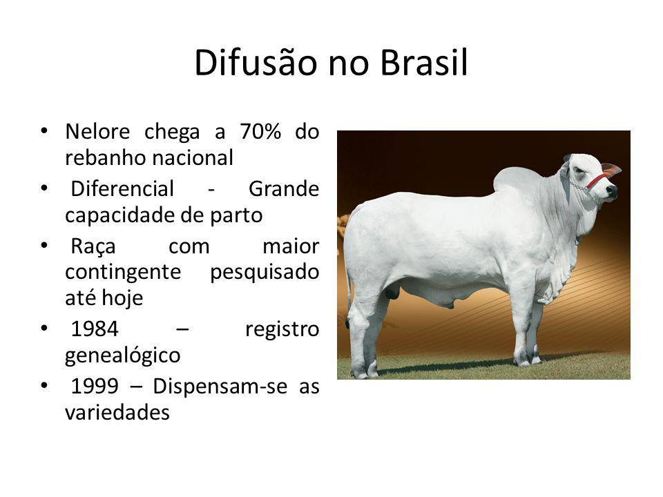 Difusão no Brasil Nelore chega a 70% do rebanho nacional
