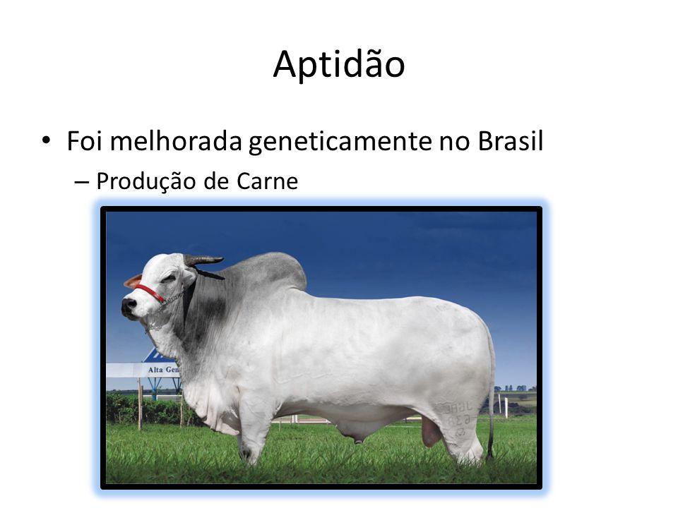 Aptidão Foi melhorada geneticamente no Brasil Produção de Carne