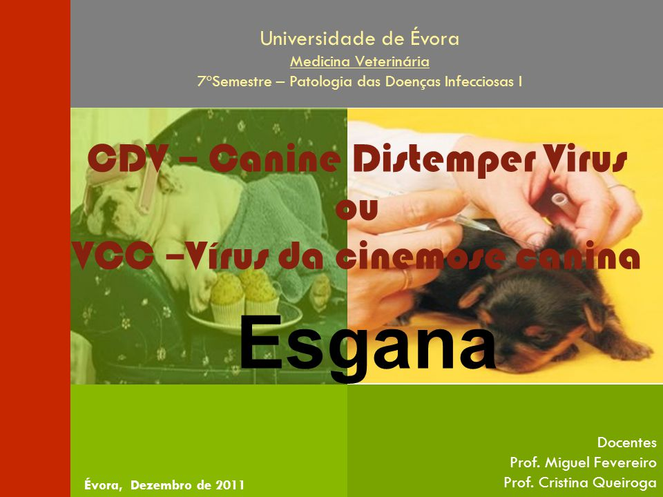 Esgana CDV – Canine Distemper Virus ou VCC –Vírus da cinemose canina