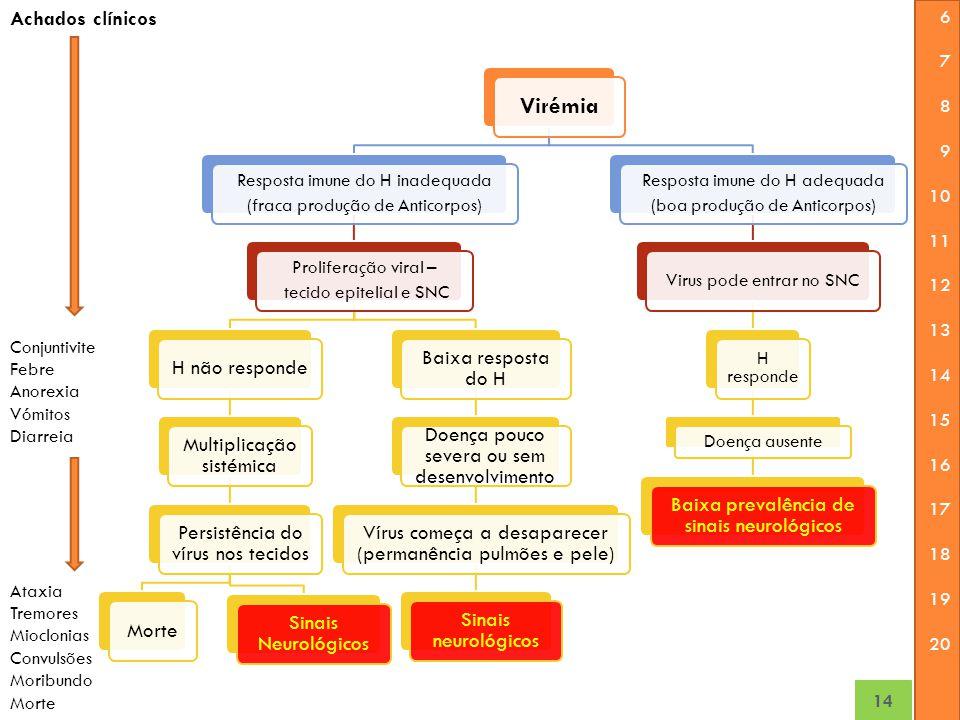 Virémia Achados clínicos H não responde Multiplicação sistémica