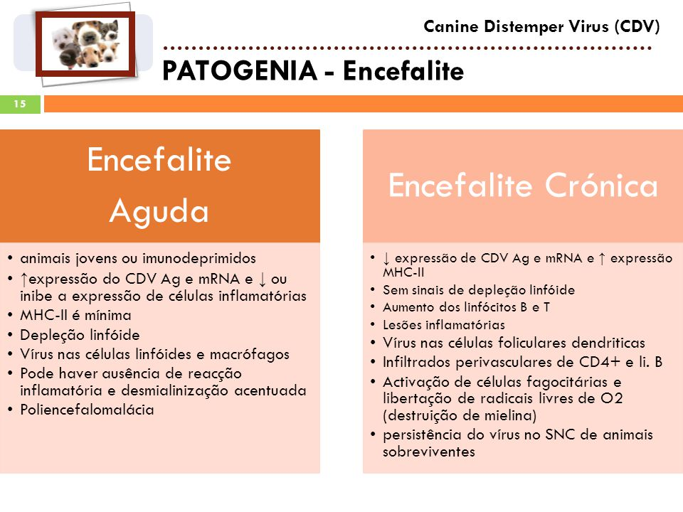 PATOGENIA - Encefalite