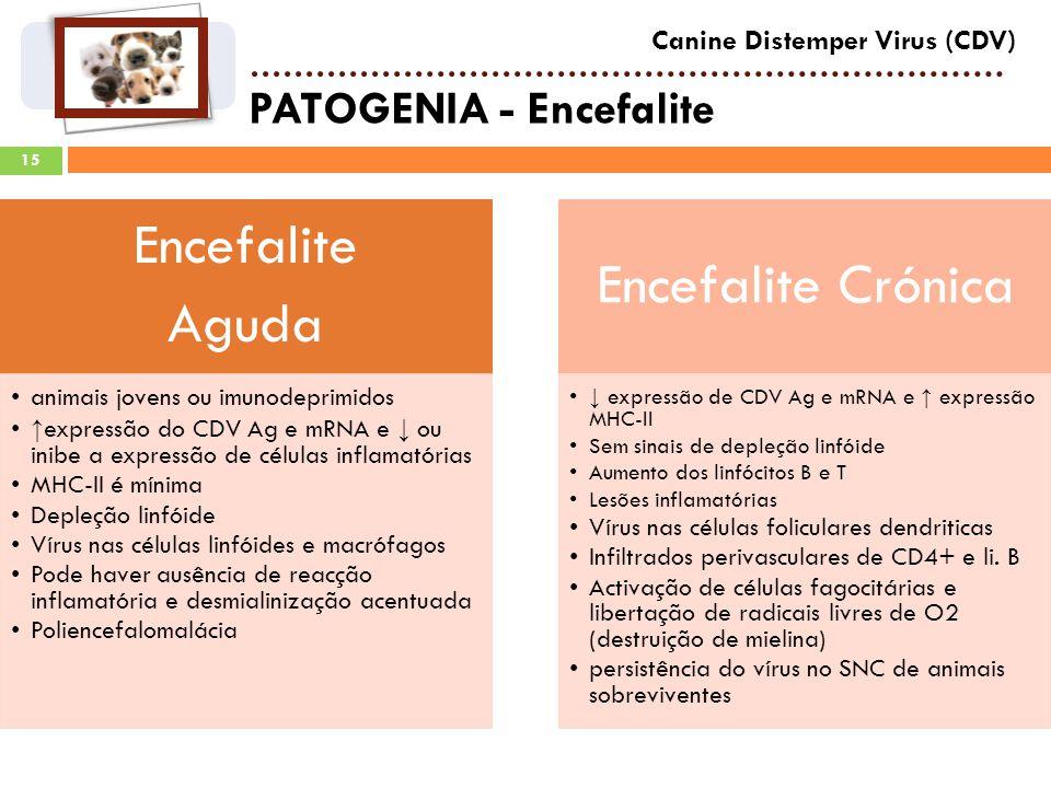 PATOGENIA - Encefalite