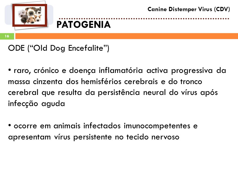 PATOGENIA ODE ( Old Dog Encefalite )