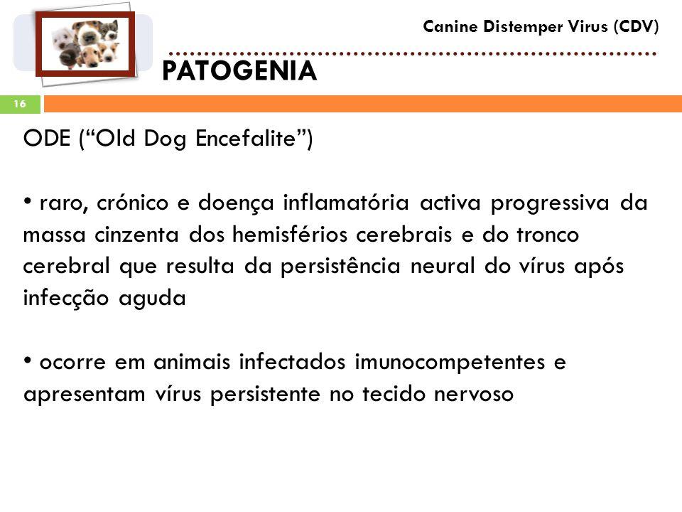 PATOGENIA ODE ( Old Dog Encefalite )