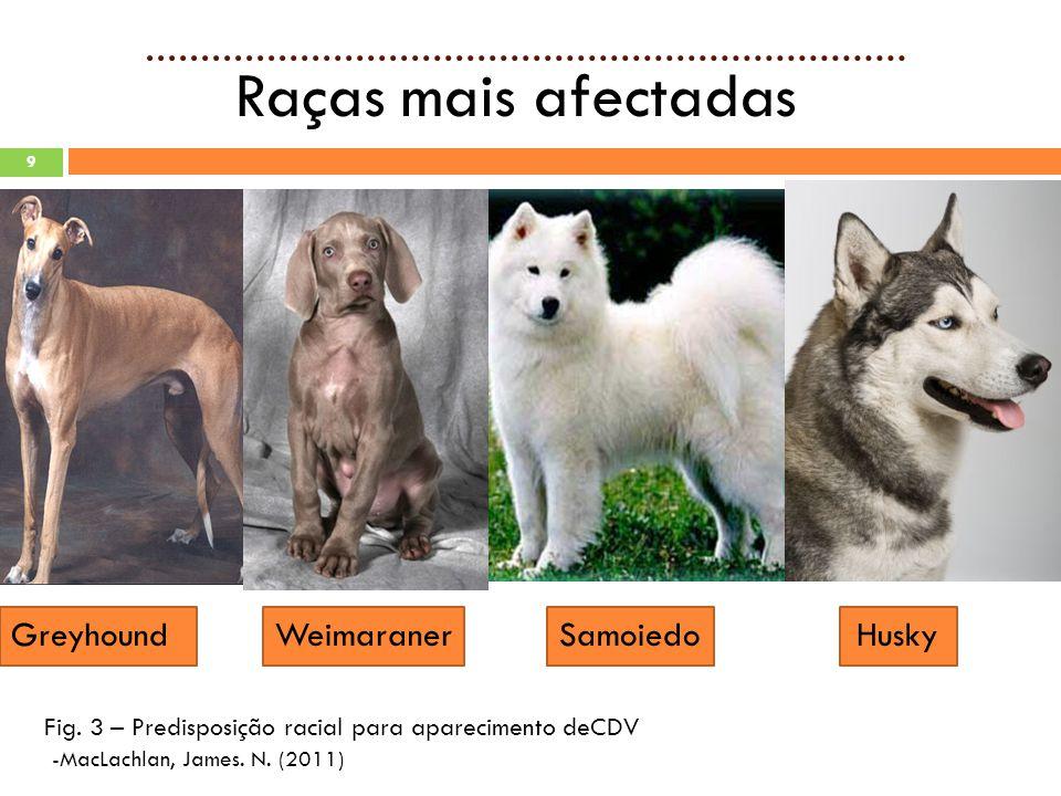 Raças mais afectadas Greyhound Weimaraner Samoiedo Husky