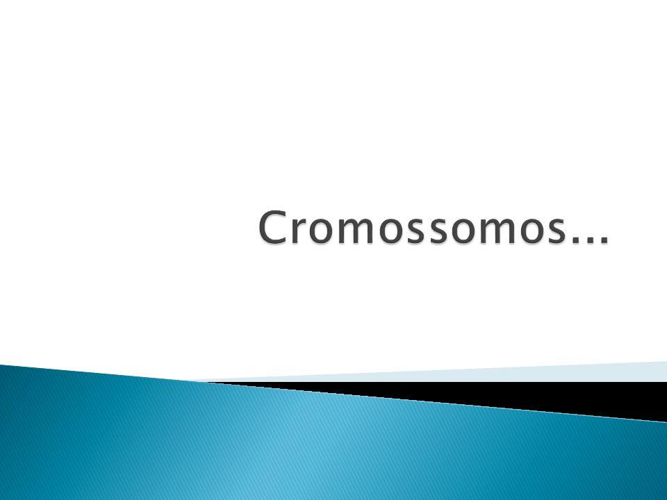Cromossomos...