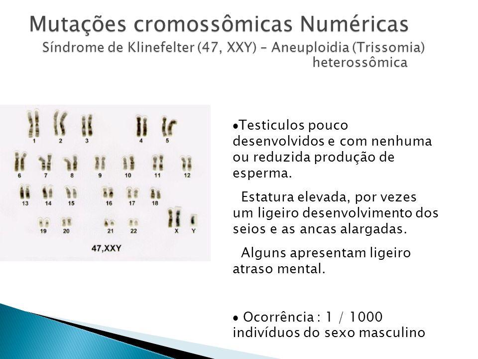Mutações cromossômicas Numéricas Síndrome de Klinefelter (47, XXY) – Aneuploidia (Trissomia) heterossômica