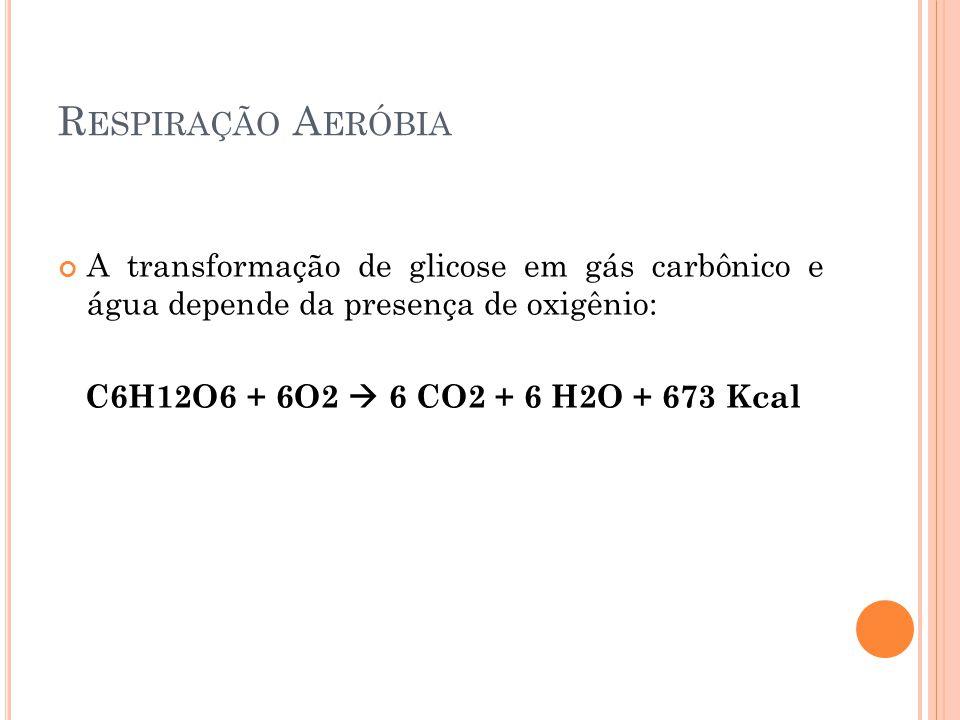 Respiração Aeróbia A transformação de glicose em gás carbônico e água depende da presença de oxigênio: