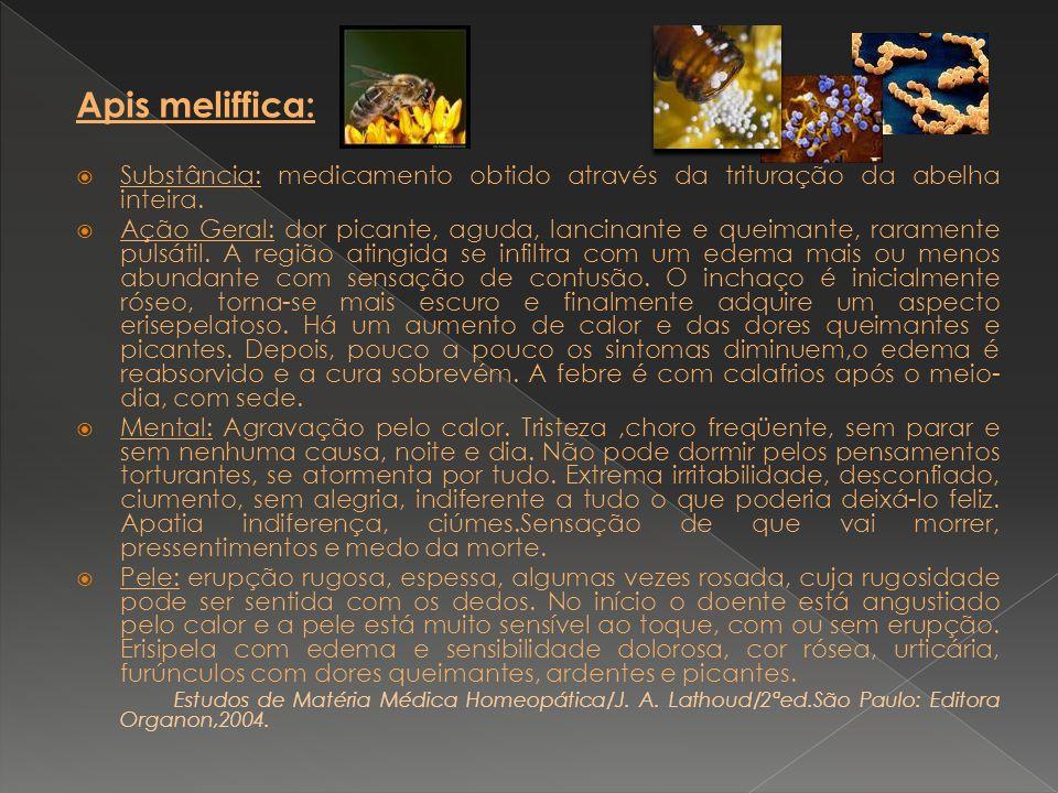 Apis meliffica: Substância: medicamento obtido através da trituração da abelha inteira.