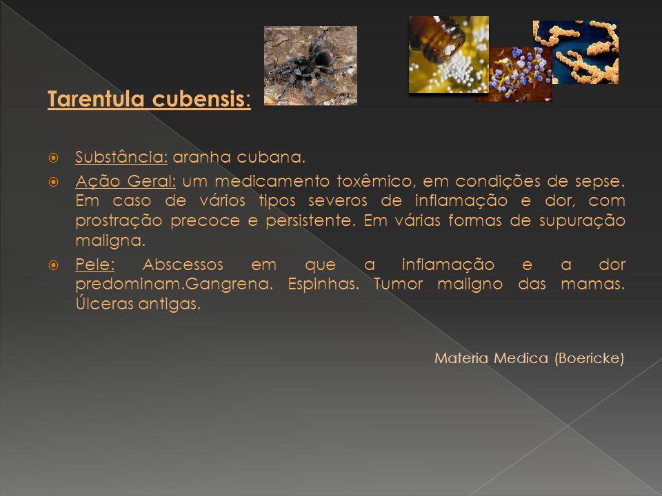 Tarentula cubensis: Substância: aranha cubana.