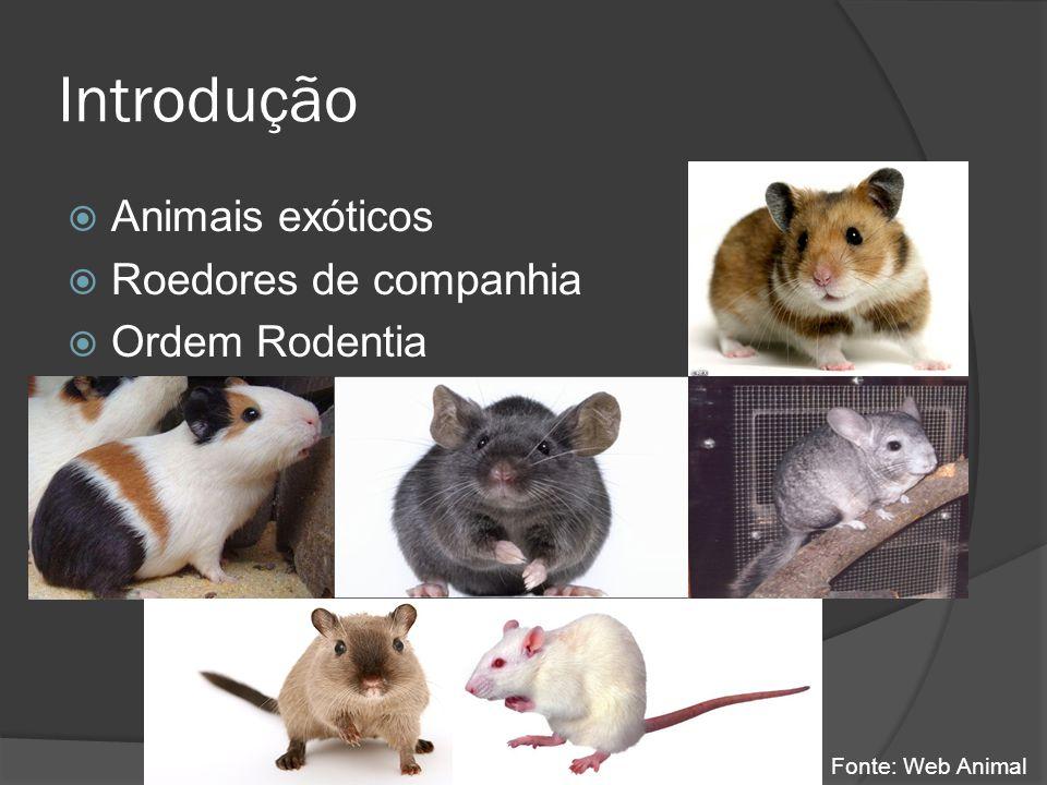 Introdução Animais exóticos Roedores de companhia Ordem Rodentia