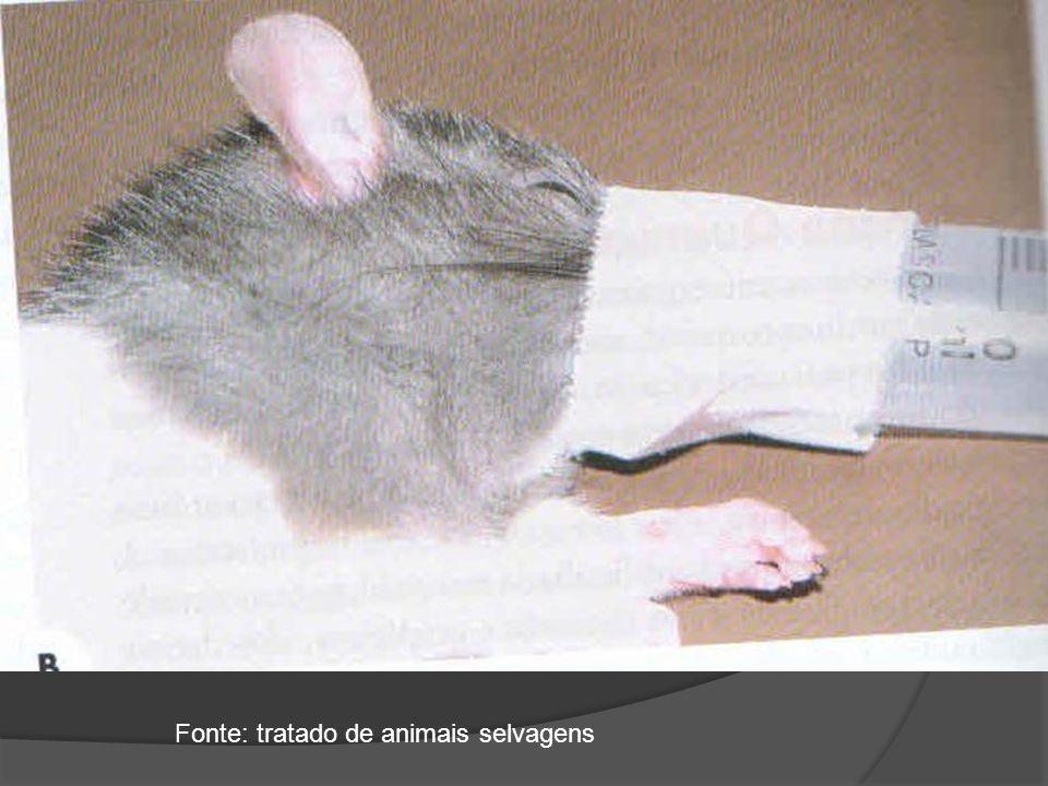 Fonte: tratado de animais selvagens
