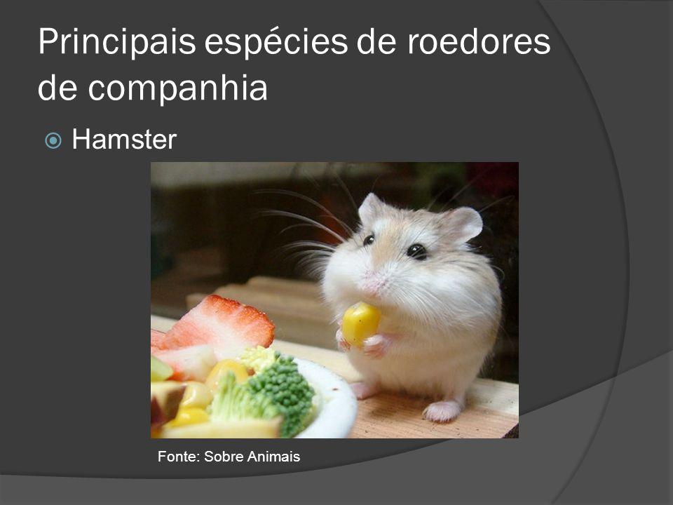 Principais espécies de roedores de companhia