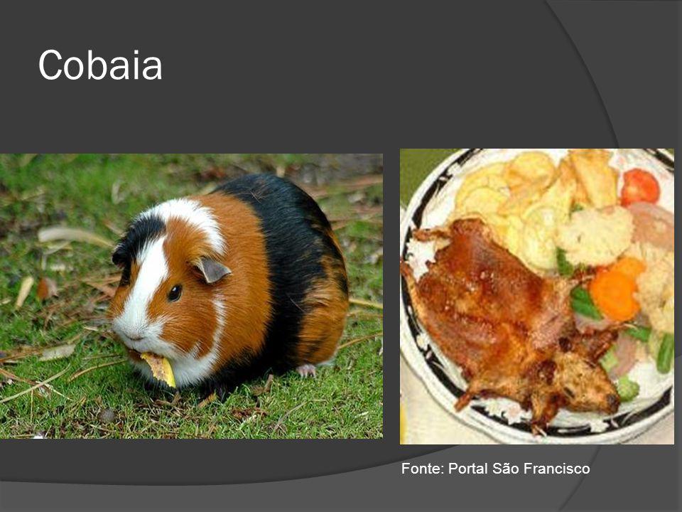 Cobaia Fonte: Portal São Francisco