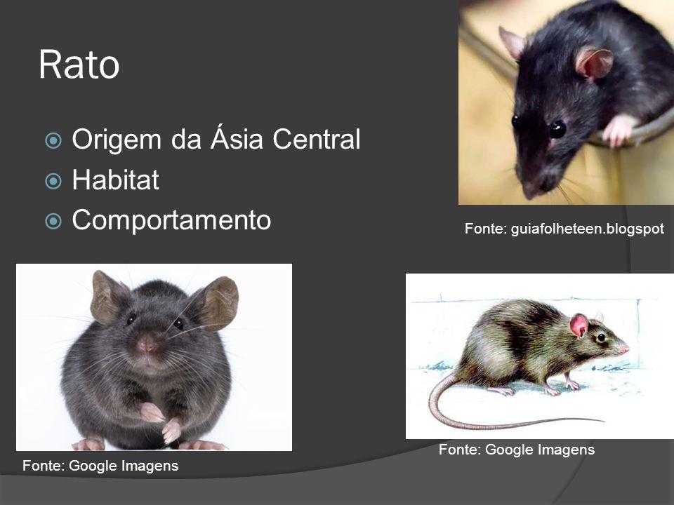 Rato Origem da Ásia Central Habitat Comportamento