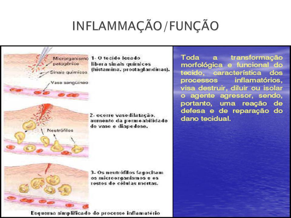 INFLAMMAÇÃO/FUNÇÃO