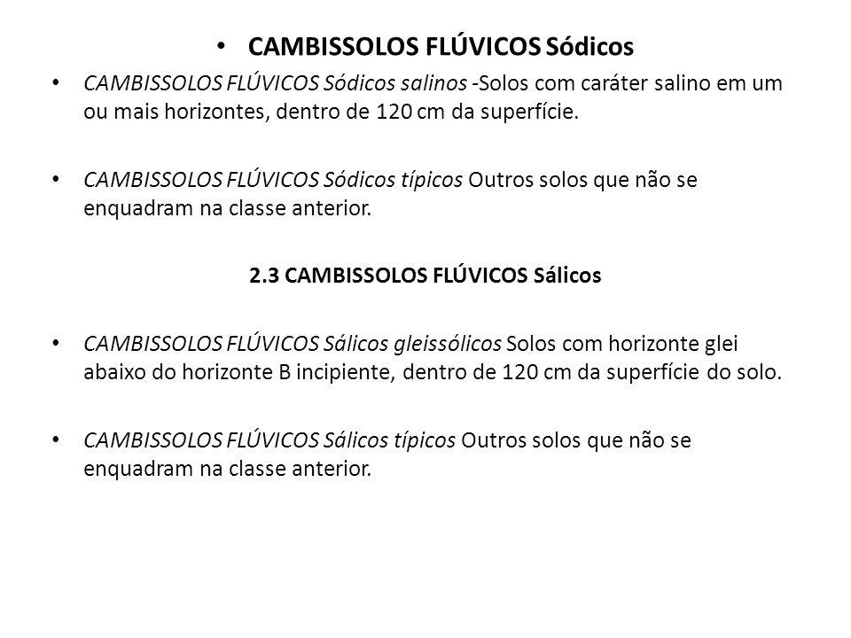 CAMBISSOLOS FLÚVICOS Sódicos 2.3 CAMBISSOLOS FLÚVICOS Sálicos