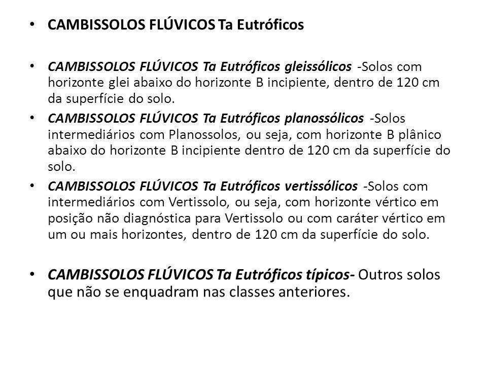 CAMBISSOLOS FLÚVICOS Ta Eutróficos