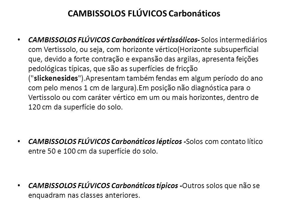CAMBISSOLOS FLÚVICOS Carbonáticos