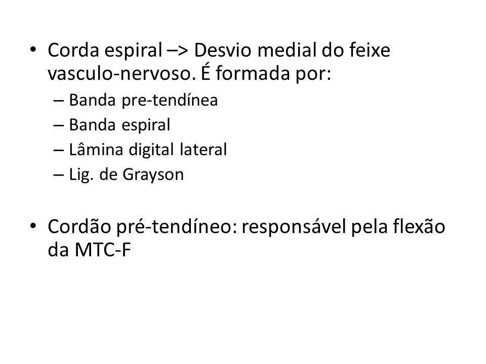 Cordão pré-tendíneo: responsável pela flexão da MTC-F