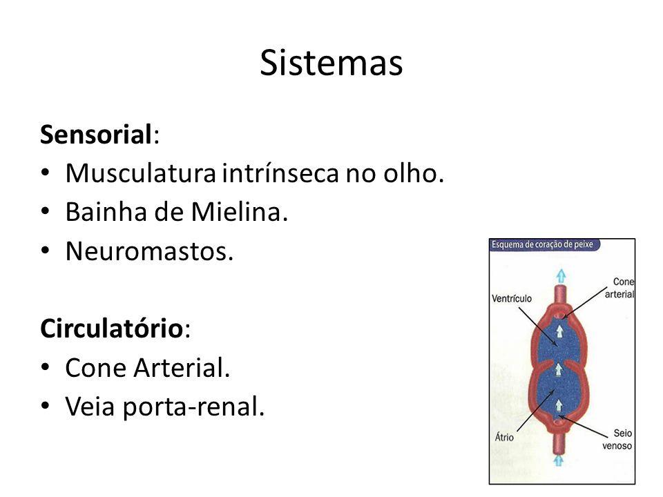 Sistemas Sensorial: Musculatura intrínseca no olho. Bainha de Mielina.