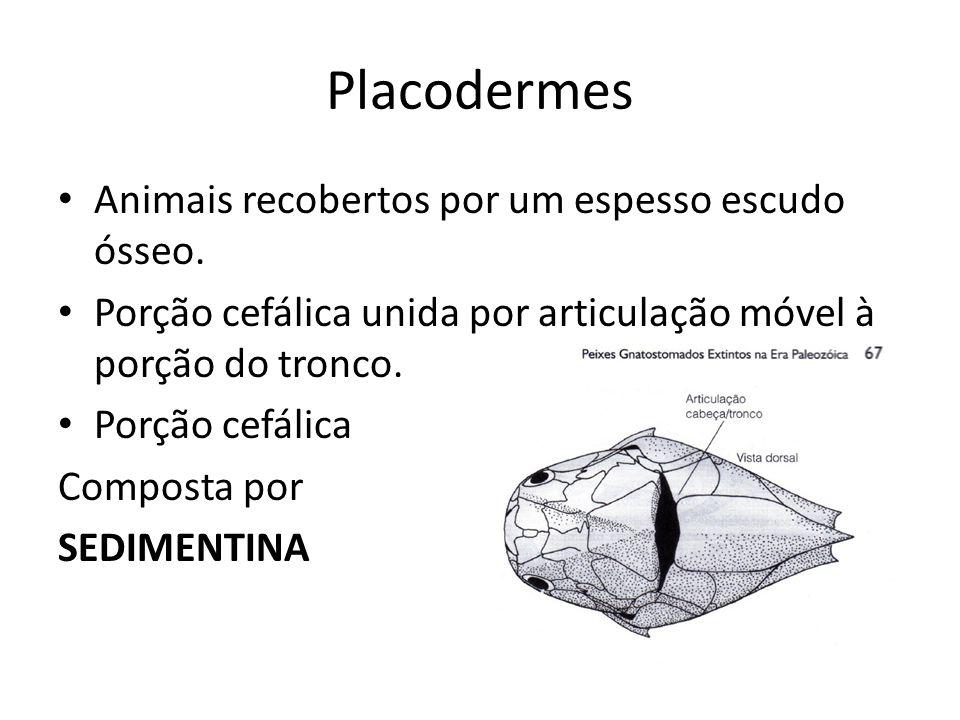 Placodermes Animais recobertos por um espesso escudo ósseo.