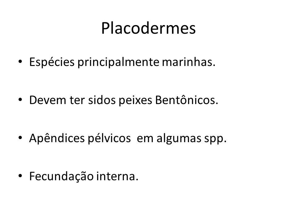 Placodermes Espécies principalmente marinhas.
