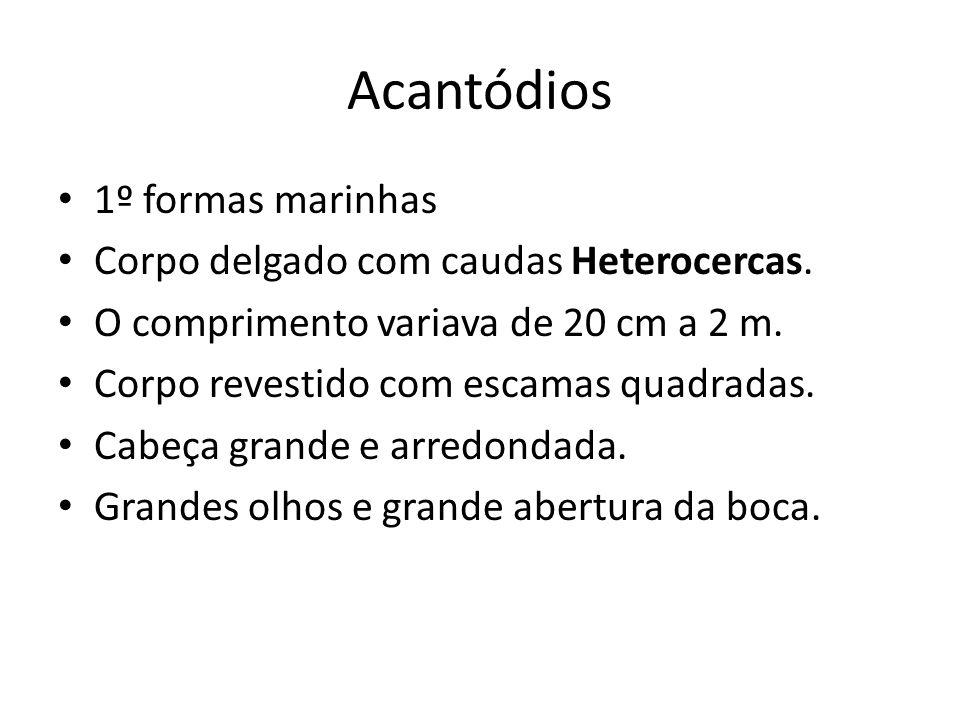 Acantódios 1º formas marinhas Corpo delgado com caudas Heterocercas.