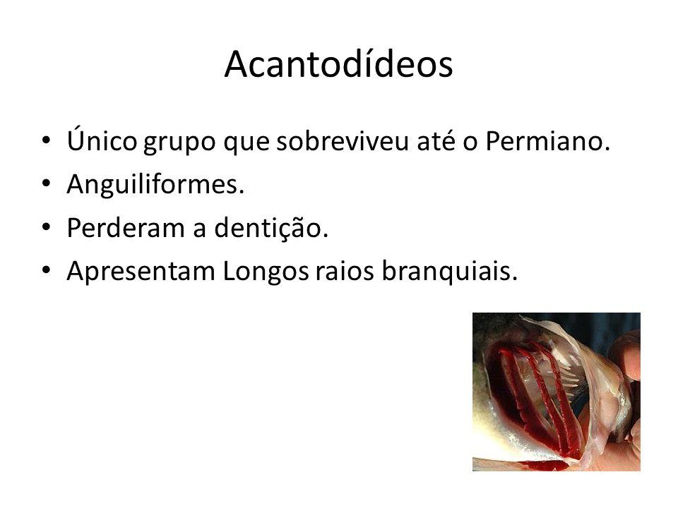 Acantodídeos Único grupo que sobreviveu até o Permiano. Anguiliformes.