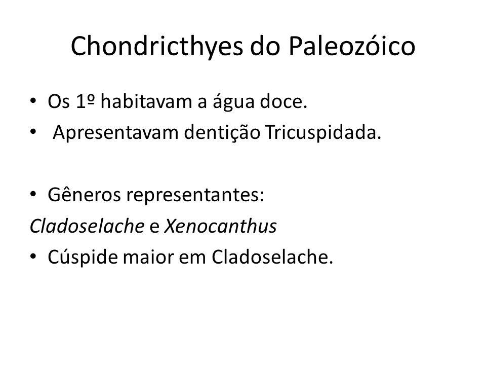 Chondricthyes do Paleozóico
