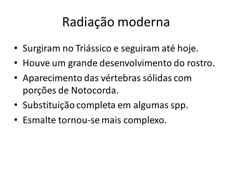 Radiação moderna Surgiram no Triássico e seguiram até hoje.