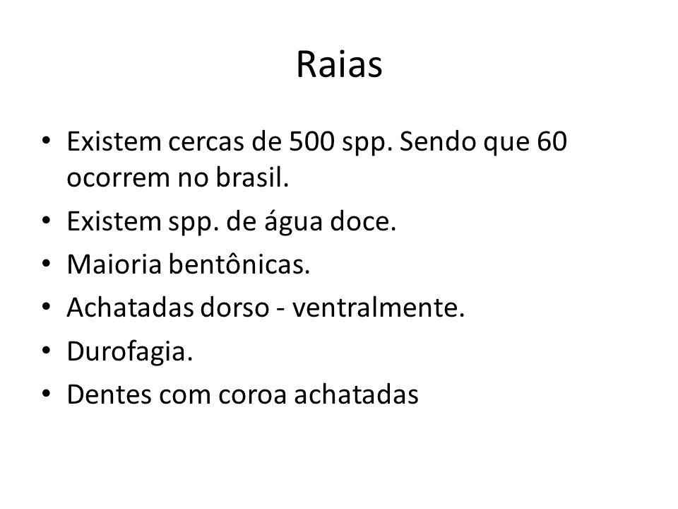 Raias Existem cercas de 500 spp. Sendo que 60 ocorrem no brasil.