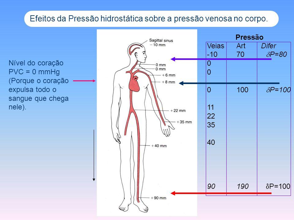 Efeitos da Pressão hidrostática sobre a pressão venosa no corpo.