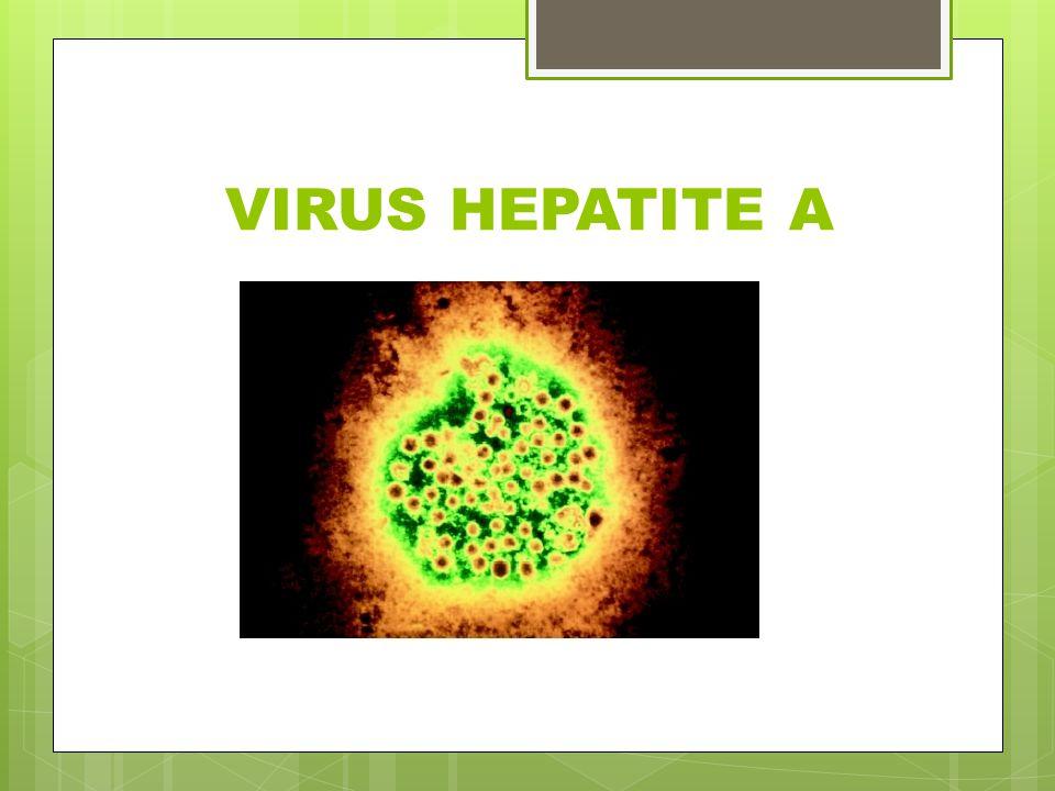 VIRUS HEPATITE A