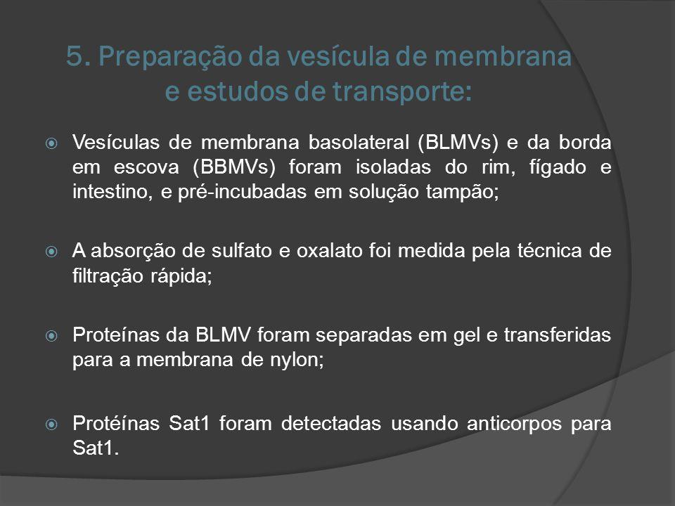 5. Preparação da vesícula de membrana e estudos de transporte: