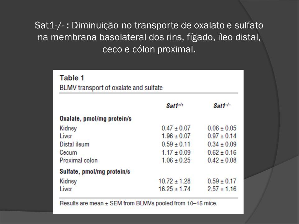 Sat1-/- : Diminuição no transporte de oxalato e sulfato na membrana basolateral dos rins, fígado, íleo distal, ceco e cólon proximal.